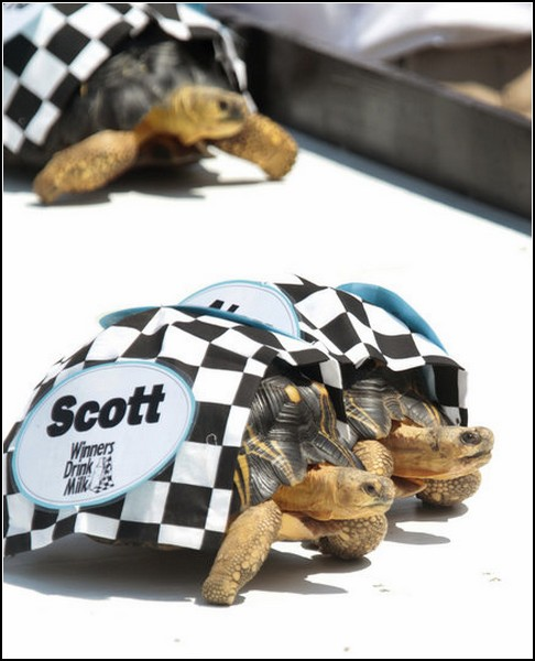 Быстрые черепахи: маневры на трассе