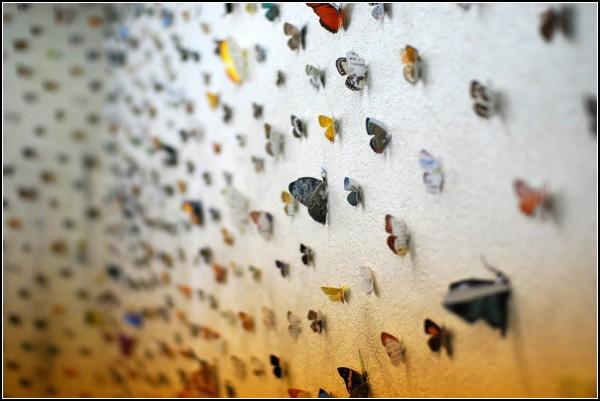 Общество глазами бабочки