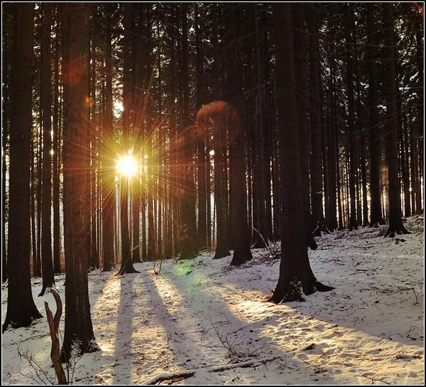 Зима и солнце: угасание природы
