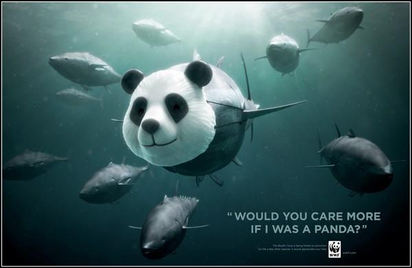 Затаившаяся панда в рекламе: тунцы тоже под угрозой