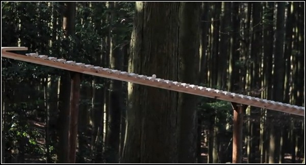 Гигантский ксилофон в лесу