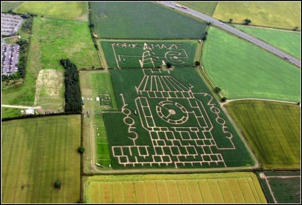 Загадочные кукурузные поля Йоркшира