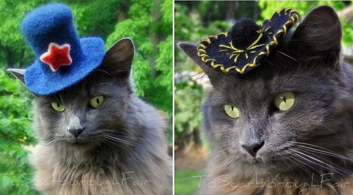 Кот-кутюр: маленькие шляпки для пушистых модников