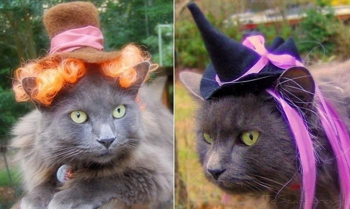 Безумный Шляпник и пушистая ведьмочка