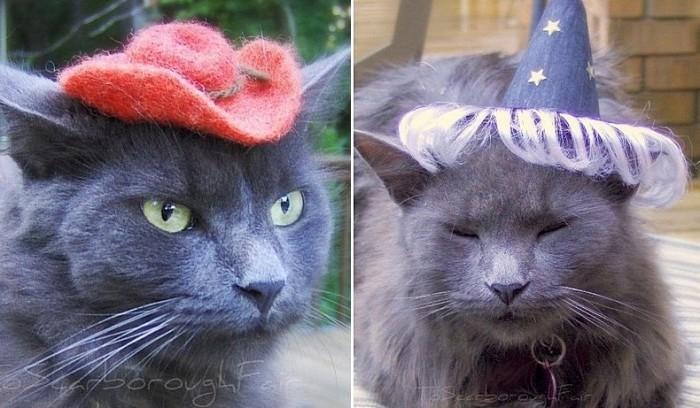 Ковбой и волшебник: маленькие шляпки для пушистых модников