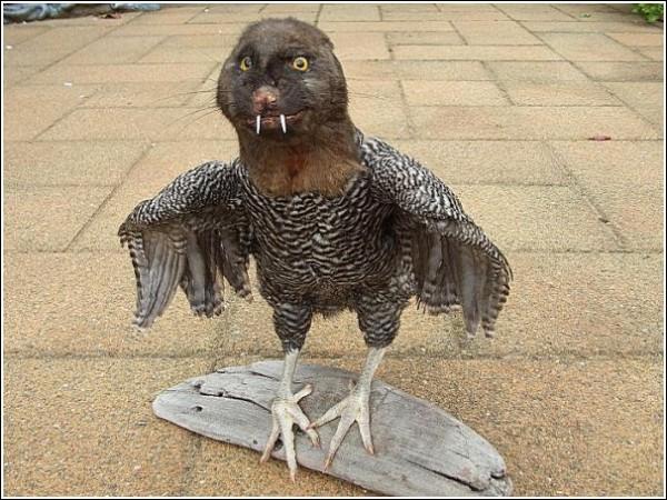 Странные животные Эндрю Ланкастера: опоссум + курица