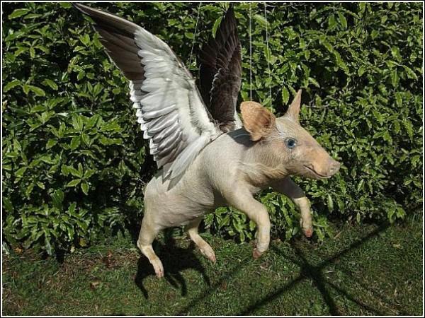 Странные животные Эндрю Ланкастера: летающий свин