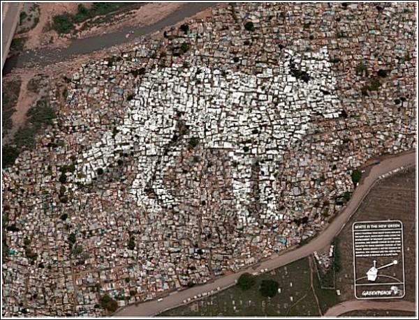 Песец на крыше: зеленая реклама из ЮАР
