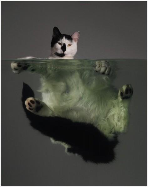 Креативные фотографии животных, которые ищут хозяев: Толстяк