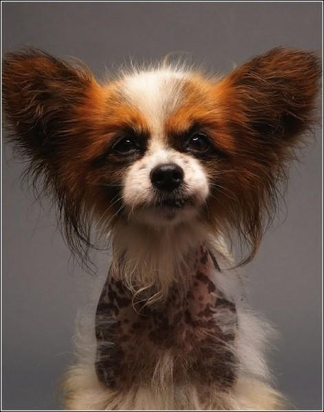 Креативные фотографии животных, которые ищут хозяев: Кристал