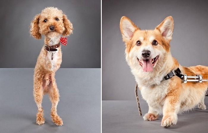 Жизнерадостные собаки-инвалиды: фотографии животных, которым не повезло со здоровьем, зато повезло с хозяевами