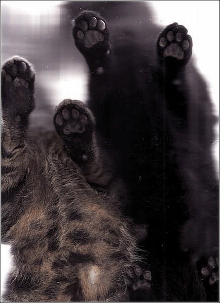 Цветной сканер для кошек: *фото* вдвоем