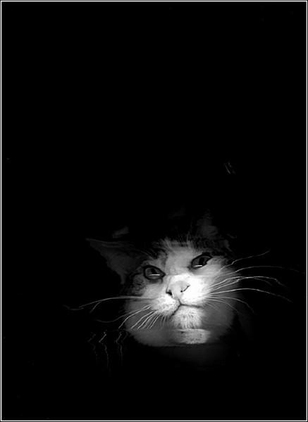 Сканер для боевых манулов: погладь кота