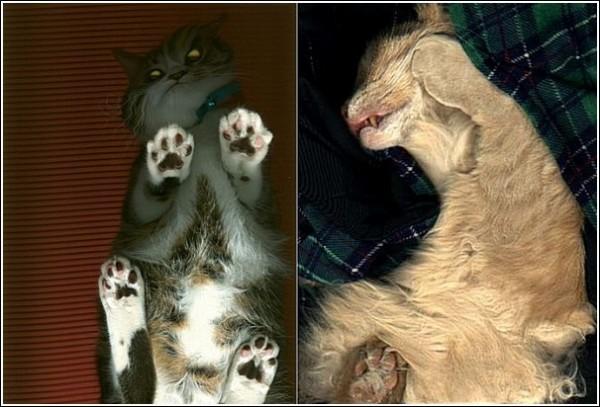 Цветной сканер для кошек: комната смеха