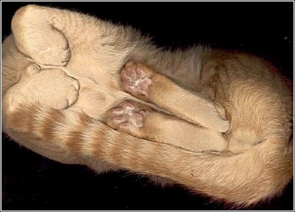 Цветной сканер для кошек: вид снизу
