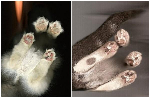 Цветной сканер для кошек: портреты любимцев в неожиданном ракурсе