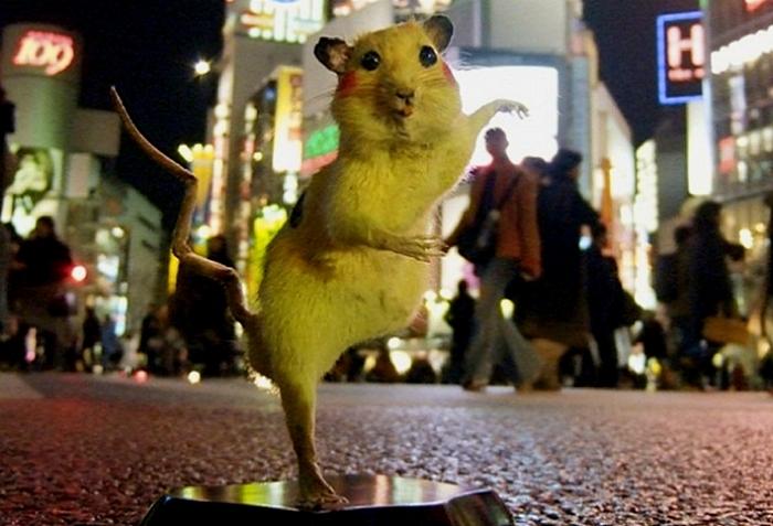 Крысы-покемоны: пикачу с токийских улиц