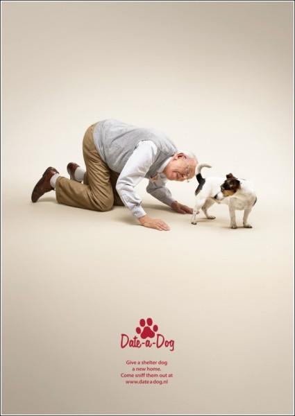 Обнюхайте пса на сайте собачьего приюта