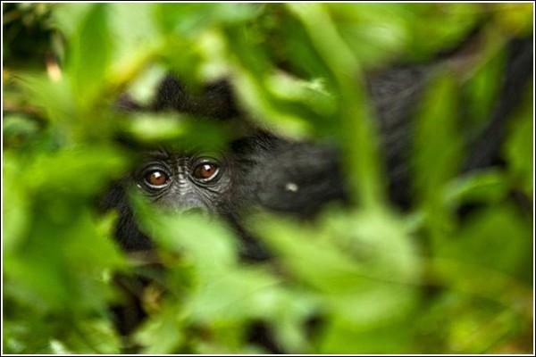 Взгляд из кустов: фото дикой природы Сюхи Дербента