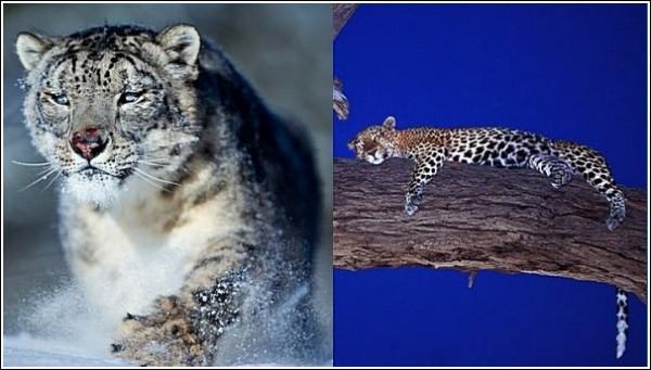 Кошачьи: фото дикой природы Сюхи Дербента