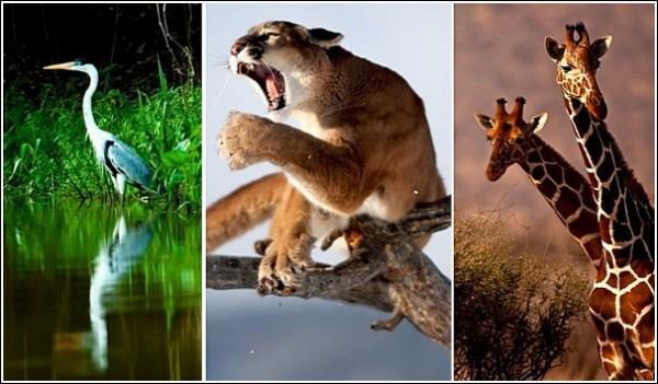 Львы, орлы и куропатки: фото дикой природы Сюхи Дербента