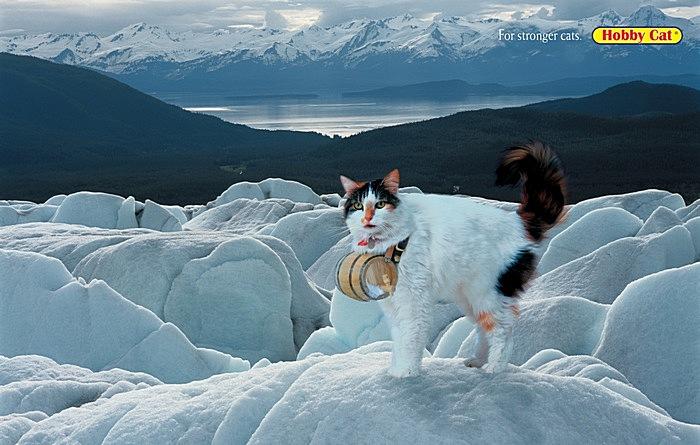 Суровые челябинские кошки: креативная реклама кошачьего корма