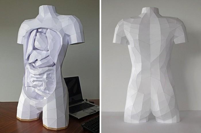 Наглядное пособие по анатомии: бумажная скульптура Хорста Кихле