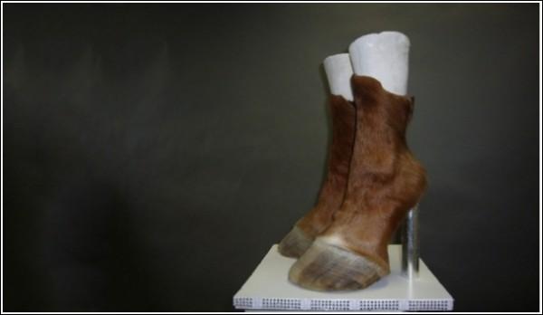 Необычная обувь Айрис Шниферштейн: сногсшибательный вариант