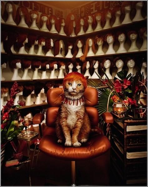 «Количество ограничено»: креативные фотографии животных, которые ищут хозяев