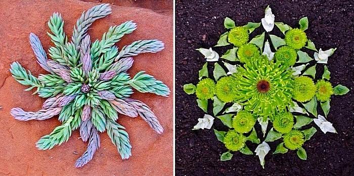 Мандалы своими руками: цветы и ветки