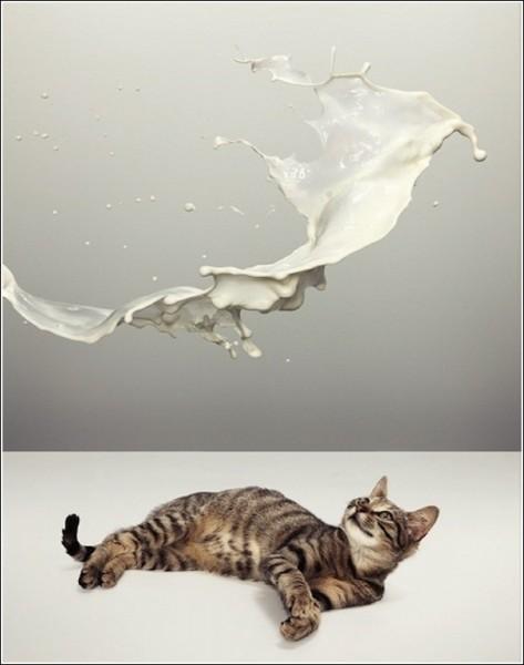 Креативные фотографии животных, которые ищут хозяев: Счастливчик