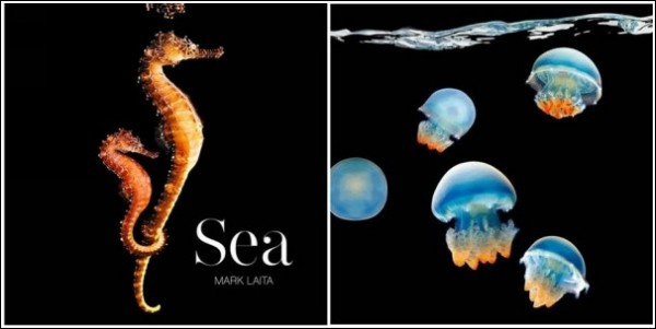 Яркие обитатели морских глубин: обложка сборника Марка Лаиты