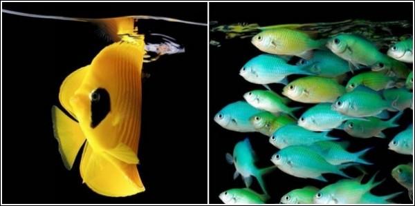 Обитатели морских глубин: яркие и юркие рыбки