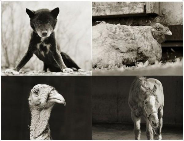«Престарелые животные»: грустные фотографии Исы Лешко