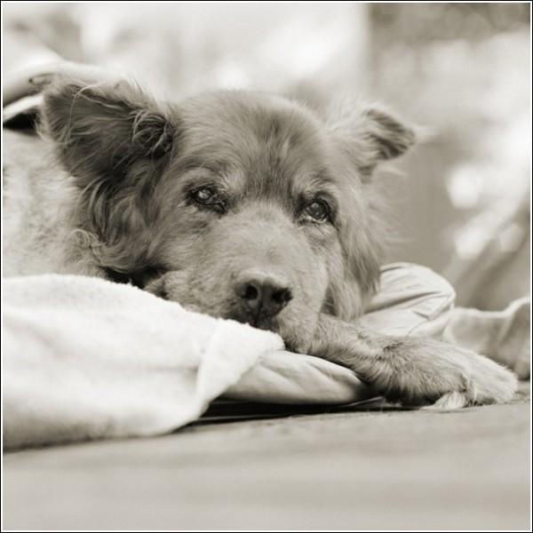 «Престарелые животные»: Рыжик, 14 лет