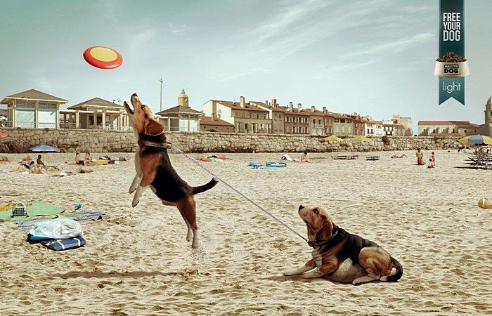 Освободите собаку от перспективы растолстеть: креативная реклама корма