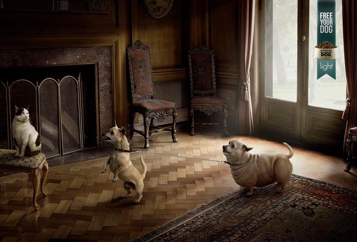 Кошки, держитесь: креативная реклама корма для собак