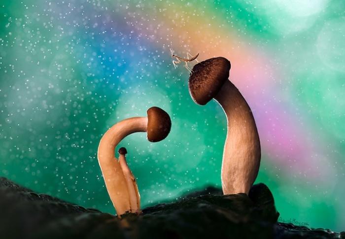 Сказочная жизнь обычных насекомых: грибное место