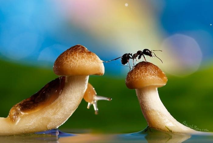 Сказочная жизнь обычных насекомых: улитка и муравей