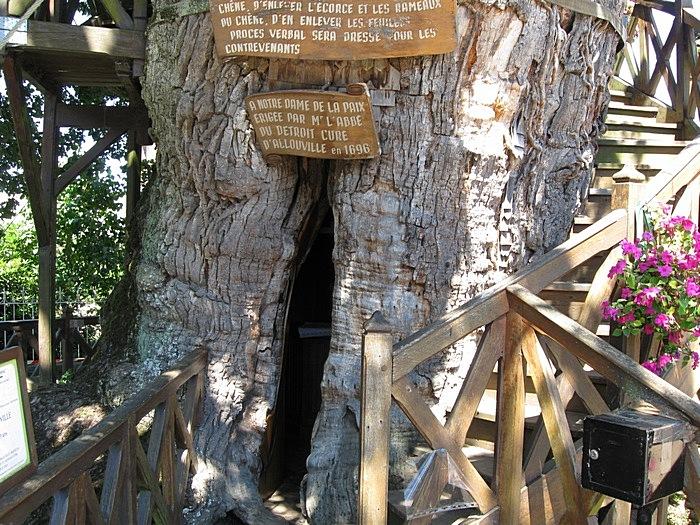 Дупло внутри старейшего дуба во Франции