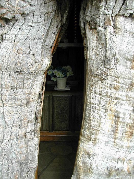 Сквозь щели в коре можно посмотреть, что делается внутри