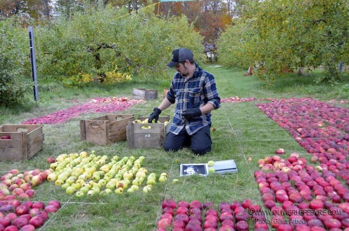 Портрет Стива Джобса из яблок: художник за работой
