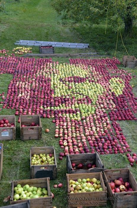 Размеры яблочного Джобса - 6,5 х 4,5 метра