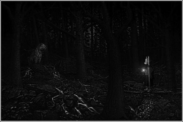 Путь к просветлению лежит через сумрачный лес