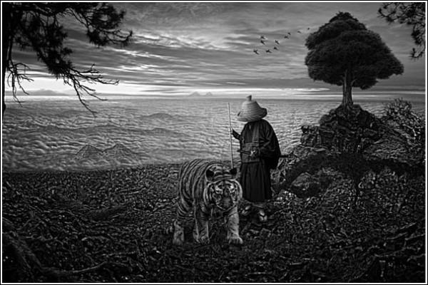 Встреча с тигром: черно-белые фотоработы Ника Педерсена