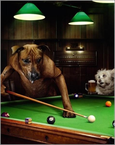 Креативные фотографии животных, которые ищут хозяев: Руфус