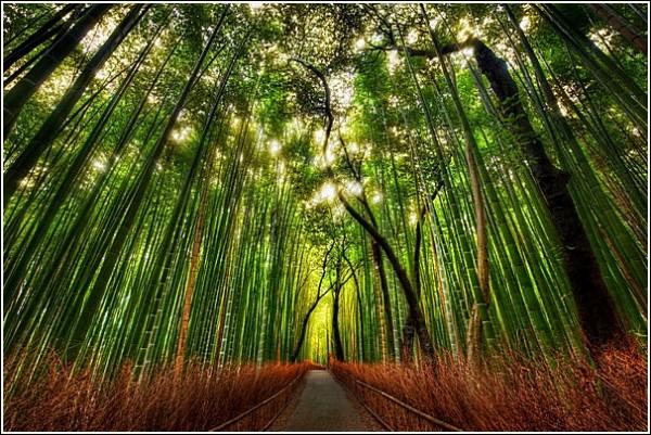 Лес: фотопейзажи Трея Рэтклиффа