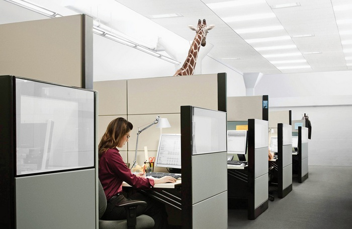 Звери вместо офисного планктона: оригинальная реклама зоопарка