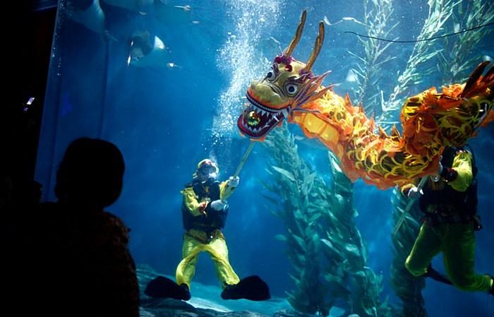 Драконовские мероприятия в шанхайском аквариуме
