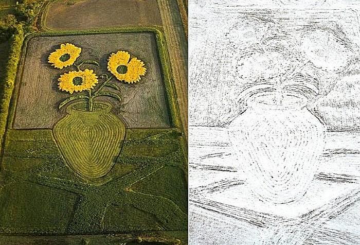 Рисунки на полях: подсолнухи летом и зимой